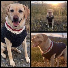 15e5eb386fc79 Ravelry  Lumberjack Dog Sweater pattern by Shari Reid Single Crochet