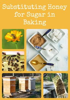 How to substitute sugar for honey when baking via Better Hens and Gardens