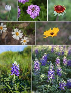 Texas wildflowers Copyright Mimi Yu