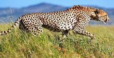 Serengeti National Park, Green Nature, Travel Tours, Travel Agency, Holiday Fun, Safari, National Parks, The Incredibles, Big 5