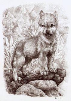 wolf cub by Liedeke on DeviantArt