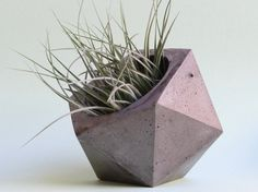 Icosaedro recipiente Jardinera, Jardinera de concreto, suculenta, aire de planta. cactus.