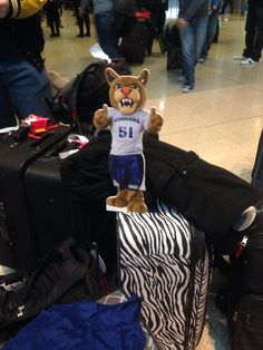 Two thumbs up from Scooter....we have arrived safely and we all have our luggage!