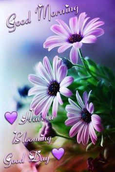 good morning Stunning wallpapers with beautiful flowers