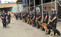 NYPD police dogs formed a honor guard Wednesday for Transit K9 Bear, a six-year-old German shepherd who was injured in the line of duty last week, as he was released from an animal hospital in Manhattan. Bear sustained four broken teeth and a laceration to his tongue while aiding his handler, Police Officer Tieniber (pictured), in subduing and arresting a suspect. Shared by nyfirestore.com