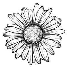beautiful monochrome, black and white daisy flower isolated. for greeting cards . beautiful monochrome, black and white daisy flower isolated. for greeting cards and invitations of the wedding, birt Gerbera Daisy Tattoo, Daisy Flower Tattoos, Daisies Tattoo, Daisy Tattoo Designs, White Daisy Tattoo, Gerbera Flower, Daisy Flower Drawing, Sunflower Drawing, Margarita Tattoo