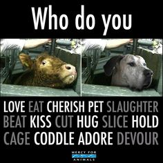 People should love them all. Do no harm to them. The inside of one is no different than all. They were meant to be CARED for, not abused nor hurt, nor eaten.