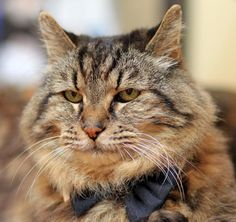 Corduroy Is the World's Oldest Cat, But Still Acts Like a Kitten