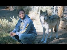 A Wolf Approaches A Veteran & What Happens Is Something You Won't Believe Traditional treatment and medications are not always enough for veterans with PTSD. At Lockwood Animal Rescue Center, these veterans are getting wolf therapy–and it's amazing.