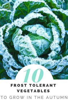 10 Frost Tolerant Vegetables To Grow In Fall - Winter garden Vegetable Garden Tips, Veg Garden, Lawn And Garden, Winter Vegetables, Growing Vegetables, Gardening For Beginners, Gardening Tips, Organic Gardening, Fall Plants