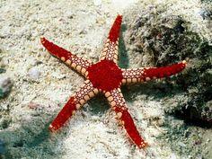 #Reef