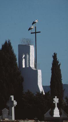Spagna-Extremadura-Ciconia ciconia (Cicogna bianca )