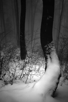 Winter woods - LOVE this.. another one for my walls..