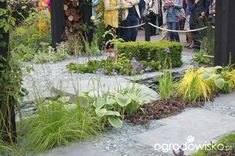 Ogród niby nowoczesny ale...