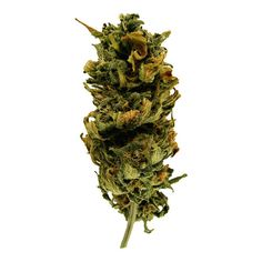 Blue Medi Kush Kush ❤ liked on Polyvore featuring drugs, fillers, items, medicinal and smokes