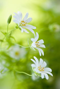 The inspirational art of our mother nature is really amazing! Little Flowers, Green Flowers, Pretty Flowers, White Flowers, Fotografia Macro, Beautiful Nature Pictures, Deco Floral, Flower Backgrounds, Flower Pictures