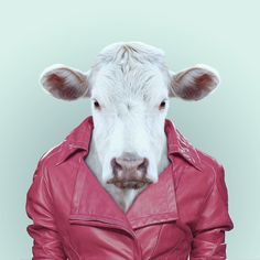A sheep in a leather jacket? An owl rocking a pink blazer? A cow looking very fetching in pink? These are just some of the funny animal portraits you'll enjoy discovering, as part of an ongoing series...