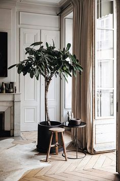 Soothing, neutral tones in this living room with a pale wood parquet floor, creamy panelled walls and natural linen curtains. Love the scale of the large potted houseplant in a black pot.