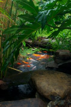 Peek at this great Koi pond through the over- grown landscape!