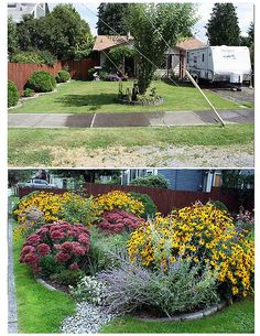 Adding a rain garden can really transform a home. Rain Garden, Water Wise, Boarders, Garden Beds, Canning, Plants, Gardening, Design, Home Canning
