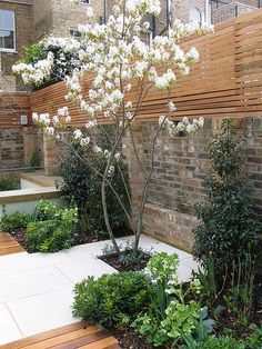 Cool contemporary classic 13 copyright Charlotte Rowe Garden Design 5610180059 m