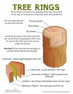 Fourth Grade Life Science Earth & Space Science Worksheets: Tree Rings