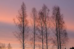 Pastel Colored Sky III
