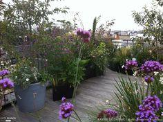Green Terrace, Terrace Garden, Garden Spaces, Inside Outside, Flat Roof, Terrazzo, Garden Inspiration, Rooftop, Backyard Ideas