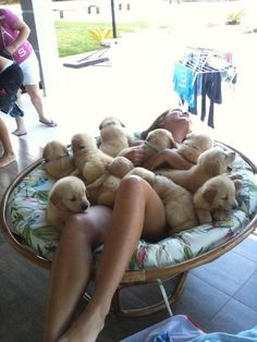 ALL THE PUPPIES!