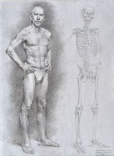 Männliche Front plus Skelett - Anatomy and Figure Drawing - Academic Drawing, Academic Art, Drawing Studies, Male Figure Drawing, Figure Sketching, Figure Drawing Reference, Human Anatomy Drawing, Body Drawing, Life Drawing