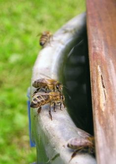 Homestead Backyard: How To Attract Honey Bees To Your Organic Garden