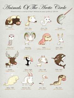 The Children's Guide To Natural History, Art Prints Featuring Animals From Around the World
