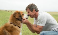 'A Dog's Purpose' Trailer: Finally, the Canine Reincarnation Story We've Been Waiting For A Dogs Purpose Movie, Video Series, Set Video, Video Clip, A Dog's Journey, Peliculas Online Hd, Constantin Film, Film Gif, Comedy Film
