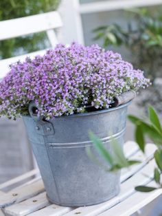 TOP 10 Winter Plants To Brighten Up Your Balcony