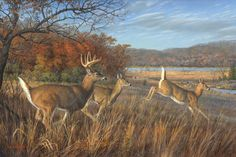 """Breaking Cover- Deer"" by Jim Hautman"