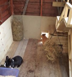 All sorts of rabbit housing idea for you to view. Great ideas, lots of fun and ways to make your bunnies' housing an attractive feature in the garden/home as well as a fantastic environment for. Bunny Sheds, Rabbit Shed, Rabbit Run, Bunny Rabbit, Rabbit Cages Outdoor, Outdoor Rabbit Hutch, Guinea Pig Toys, Guinea Pig Care, Diy Bunny Hutch