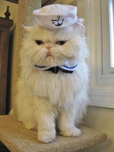19-photographies-de-chats-victimes-de-la-passion-delirante-de-leurs-maitres-pour-halloween15
