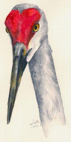 Kelly Riccetti   WATERCOLOR     Sandhill Crane (Grus canadensis)