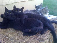 more farm cats