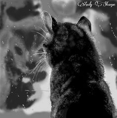 Pussy cat and reflection, this was a challenge draw set by my facebook group ds2addicts