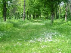 Lombház: Kecskemét Dream Garden, Hungary, Nature, Plants, Flora, Plant, The Great Outdoors, Mother Nature, Planting
