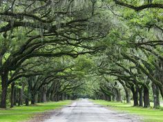 Savannah made Elite Daily's list of Hidden Travel Destinations For The Millennial Traveler On A Budget! Usa Places To Visit, Places To Travel, Travel Destinations, Places To Go, Travel Stuff, Amazing Destinations, Where Is America, Live Oak Trees, Savannah Chat