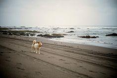 Playa Cahuil, Sur de Chile