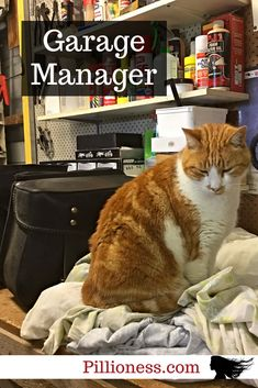Hector the motorcycle cat knows how to run a garage.but it's pretty exhausting work. Cat Love, Biker, Motorcycles, Garage, Fur, Cats, Pretty, Animals, Gatos