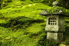 love all the varieties of moss in the gardens.