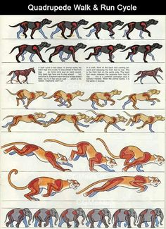 Running quadrupeds reference