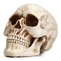 Αποτέλεσμα εικόνας για human skull