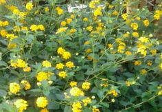 #Flores #Floresdemijardin #bellezanatural