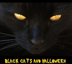 The story of a beautiful black cat - SouTman Chocolate Vodka, Norse Goddess, Walk Out The Door, Genuine Smile, Work Friends, Image Cat, Face Light, Yellow Eyes, Free Stock Photos