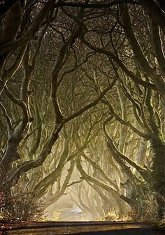"""""""Entwined - The Dark Hedges"""" ~ by Gary McParland, taken in Armoy, County Antrim, Northern Ireland. The Dark Hedges is an avenue of 300 year old beech trees situated along Bregagh Road, 3 miles from the village of Stranocum. // I love this road. Dark Hedges Ireland, Beautiful World, Beautiful Places, Amazing Places, Beautiful Pictures, Tree Photography, Classic Photography, Artistic Photography, Landscape Photography"""